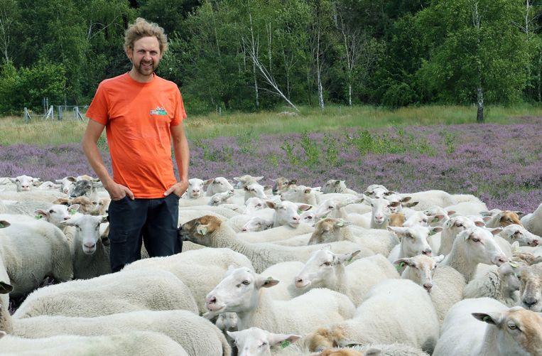 Archieffoto van Maarten D'Hondt van vzw Kemp met enkele lammeren.