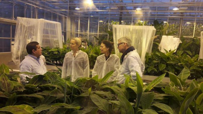 Minister Sigrid Kaak en Wageningen UR-voorzitter Louise Fresco krijgen uitleg in de bananenkas van Uniform op de Wageningen Campus
