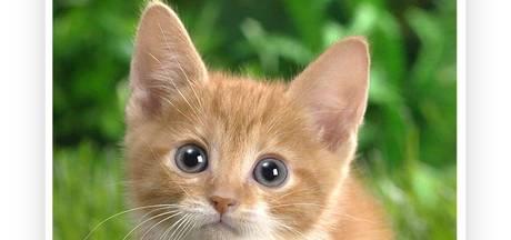 Op zoek naar een nieuwe kat? Catinder helpt