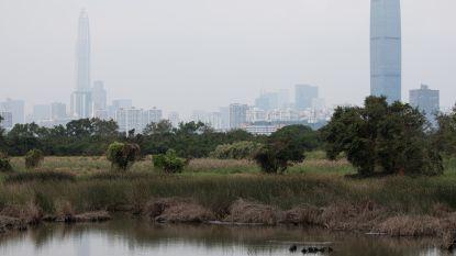 Stille revolutie in Shenzhen: eerste elektrische bussenvloot legt miljoenenstad het zwijgen op