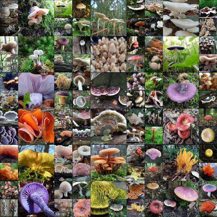 Wytze Meijlof maakte deze collage van al zijn herfstfoto's.