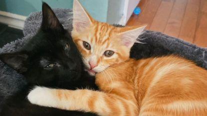 Met een kat thuiswerken is niet altijd een pretje: van toiletpapierverslinder tot aanhankelijke collega #quarantainecats