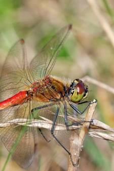 Provincie inventariseert flora en fauna in Gelderse Vallei