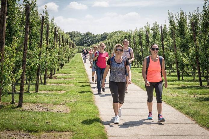 Wandelaars van de Zevendorpentocht lopen de laatste kilometers. Deelnemers doen om verschillende redenen mee: oefenen voor een grotere tocht of lekker lopen voor de lol. foto Marcelle Davidse