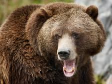 Jacht op grizzly's voor het eerst in ruim 40 jaar weer toegestaan in Wyoming