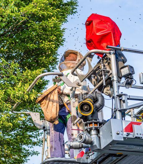 Brandweer helpt imker bij verwijderen van bijennest in Tilburgse boom