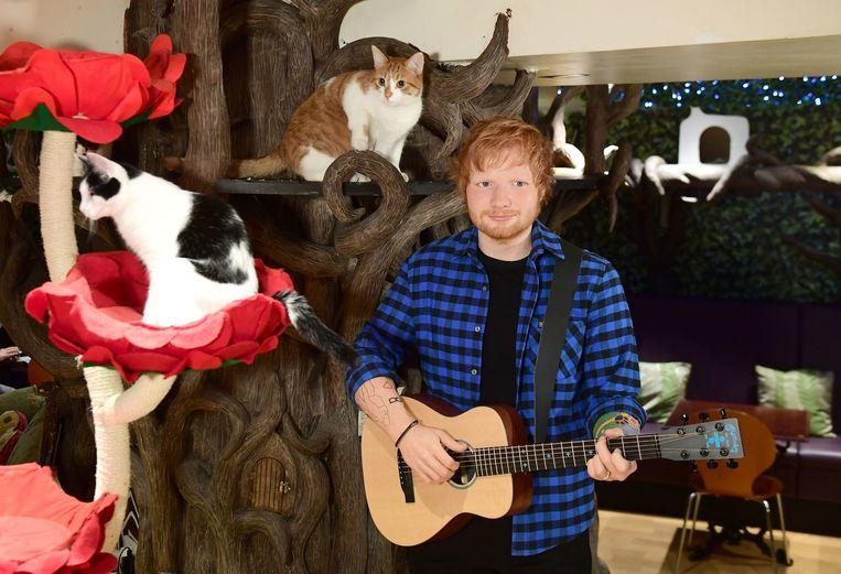 Een rosse kater naast een rosse zanger: het wassen beeld van Ed Sheeran pronkt in kattencafé.