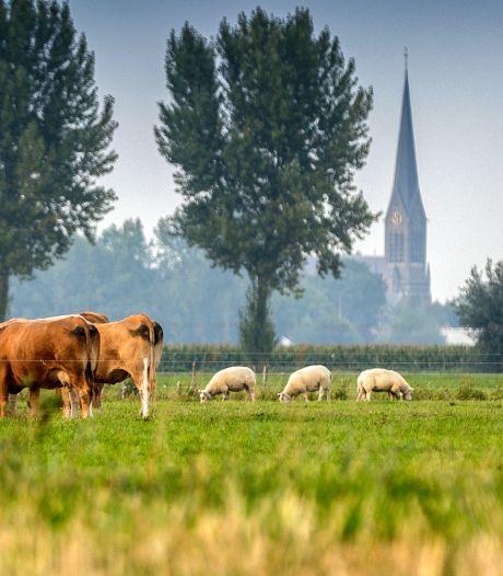 Brabantse boeren in de ban van de wind: energy farming in de polder
