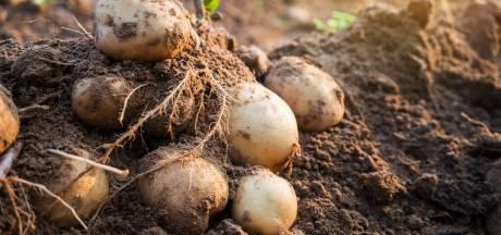 Aardappelziekte bruinrot bij akkerbouwer in Noordoost-Friesland