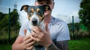 Twee dierenasielen krijgen elk 2.200 euro van provincie