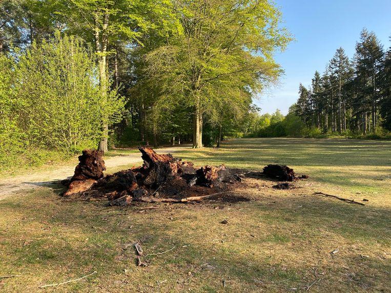 Van de restanten van de boom blijft nog amper iets over.