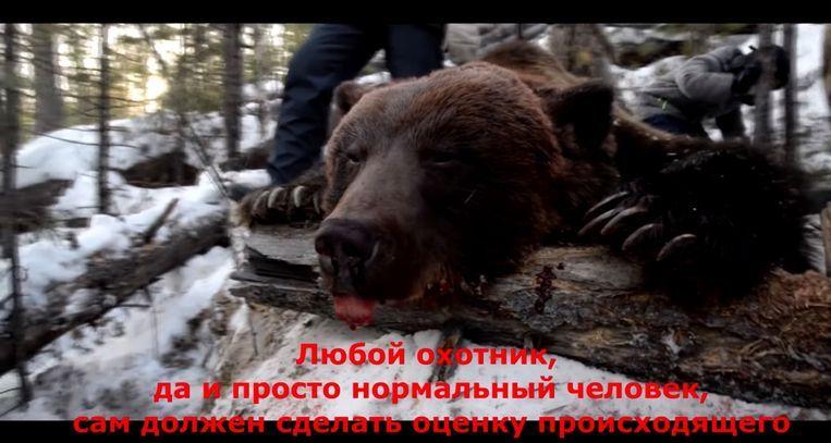 De doodgeschoten beer op een still van een filmpje dat over het doodschieten van het dier werd verspreid. Beeld null