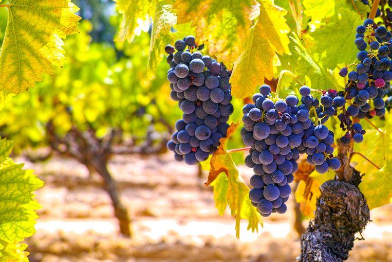 Smaakt biologische wijn zoveel beter dan gewone wijn?