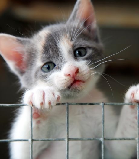 Groot verdriet in asiel Harderwijk: tientallen zwerfkatten en -kittens overleden aan kattenziekte
