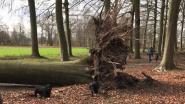 Ook stormschade in bossen Pietersheim