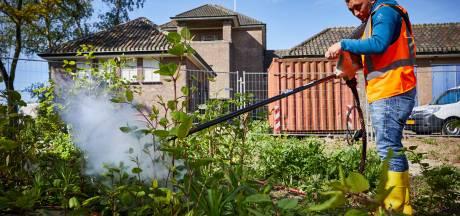 Bestrijding Japanse duizendknoop kan Breda miljoenen kosten, elektrocutie lijkt te werken