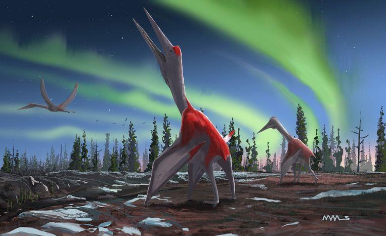 De 'Cryodrakon boreas' moet volgens vorsers er ongeveer zo hebben uitgezien. (Illustratie van tekenaar David Maas)