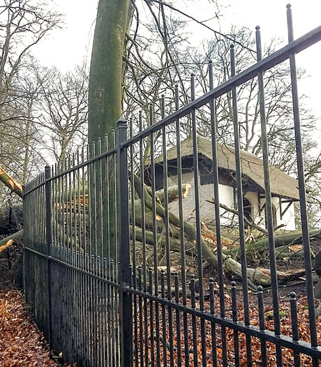 Storm zorgt voor ravage, bosgebieden verboden terrein