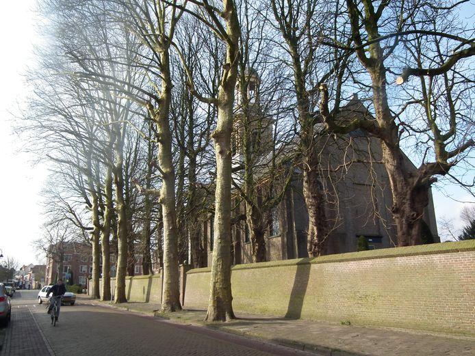 De platanen aan de Kruispoort in Steenbergen zorgen al jaren voor discussie. archieffoto Wim van den Broek