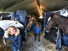 Springpaarden komen tijdens NK in Mierlo niets tekort