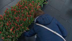 VIDEO. 100.000 gratis tulpen te plukken in Antwerpen om tulpenseizoen te promoten