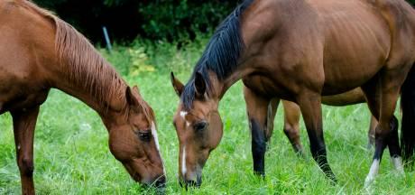 Stal in Oene getroffen door besmettelijke paardenziekte