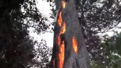 VIRAL3: Superschattig meisje uit de bol, boom brandt aan binnenkant en wasbeer vangt regendruppels