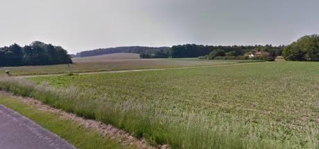 Ambitieus bomenplan Montferland in de knel