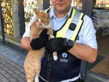 """Agenten redden kat uit leegstaande handelszaak: """"Beestje was al drie weken vermist"""""""