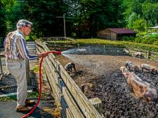 Brandslang dé oplossing voor oververhitte varkens