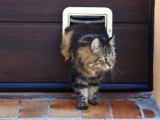 Katten met gebroken nek gevonden in vaart in Meppel