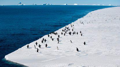 Belgen ontdekken 28 nieuwe soorten (!) op Antarctica