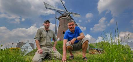 Nuenense molen De Roosdonck in zwaar weer; de staart is rot
