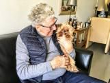 Dit is de 'lelijkste' hond van Zwolle