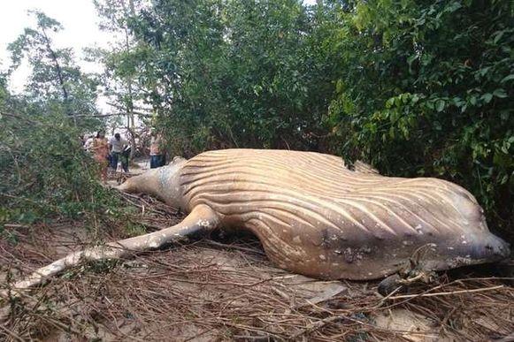 Een bijzondere vondst in de Braziliaanse jungle