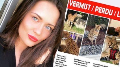 Serval vermist in Oostende: Temptation Megan belooft 1.000 euro voor wie Thor vindt