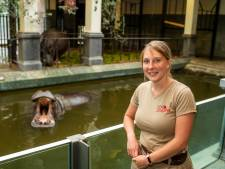 """Op pad met Lynn, verzorgster van de nijlpaarden in de Antwerpse Zoo: """"Ze zien er lief uit, maar zijn dodelijk gevaarlijk"""""""