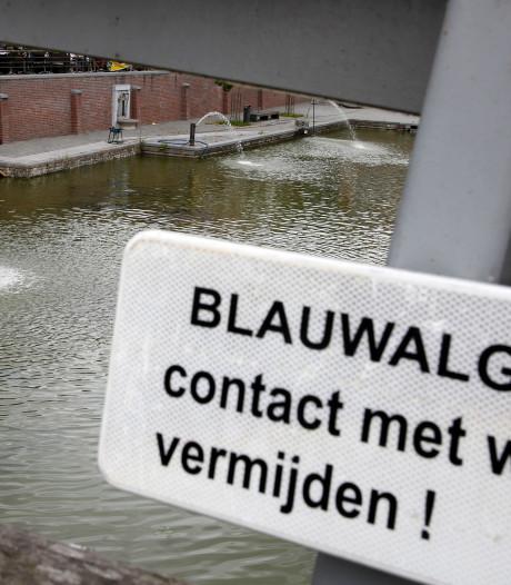 Blauwalg in water bij Van der Valk in Veenendaal