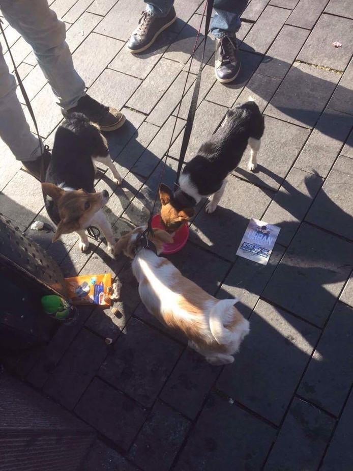 Deze pups werden afgelopen maandag te koop aangeboden. Wendy Brikman heeft de mannen meerdere keren gezien en besloot maandag de pups van eten en drinken te voorzien.