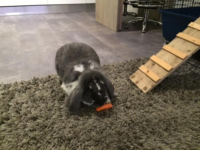 Heidi het konijn