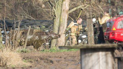 Brandweer redt twee koeien uit mestkelder