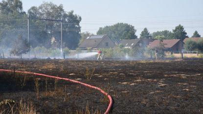 Honderden meters weiland gaan in vlammen op