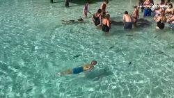VIDEO. Toeristen aaien 'ongevaarlijke' haaien. Maar dan gaat het mis