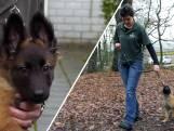 'Held' claimt puppy te redden, maar wou 'm juist dumpen