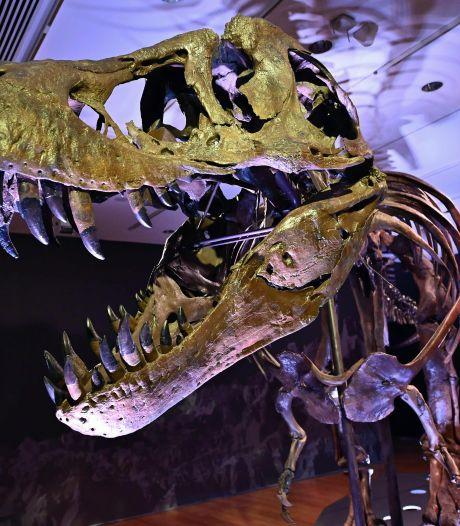 Bizarre veiling in New York: '27 miljoen euro voor een fossiel, ik snap hier weinig van'