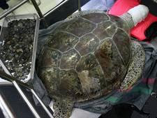 Schildpad dood na overdosis 'geluksmunten'