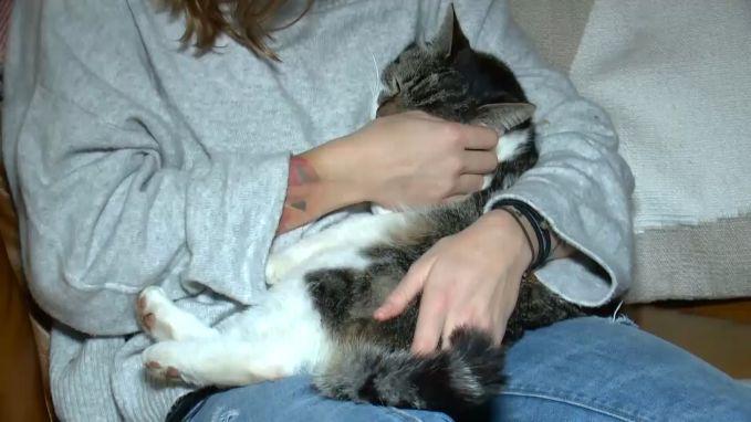 Kat miraculeus herenigd met baasje na drie maanden vermist te zijn