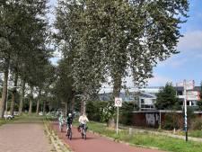Populieren langs Industrieweg Zwolle uit voorzorg plat
