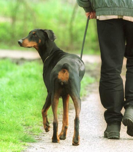 Fors meer bekeuringen uitgedeeld voor loslopende honden in Zuidplas