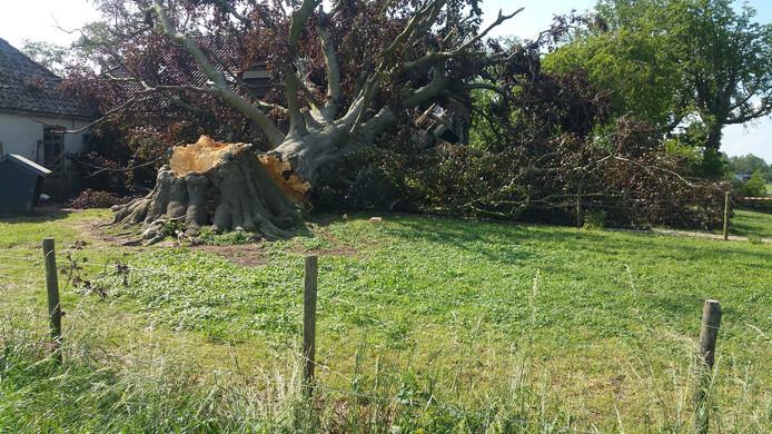 De kolossale boom viel op het voorhuis.